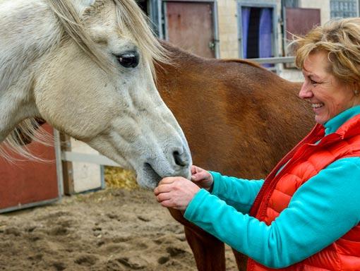 Partnerschaft für Pferde und Menschen