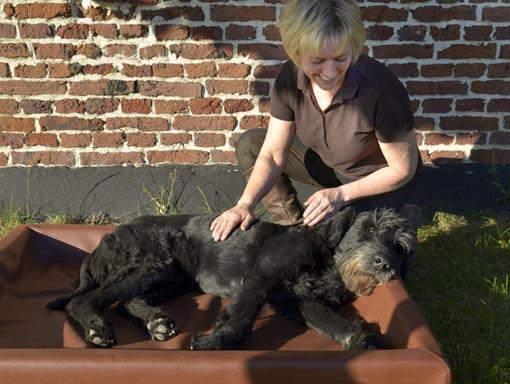 TierPhysio für Hunde